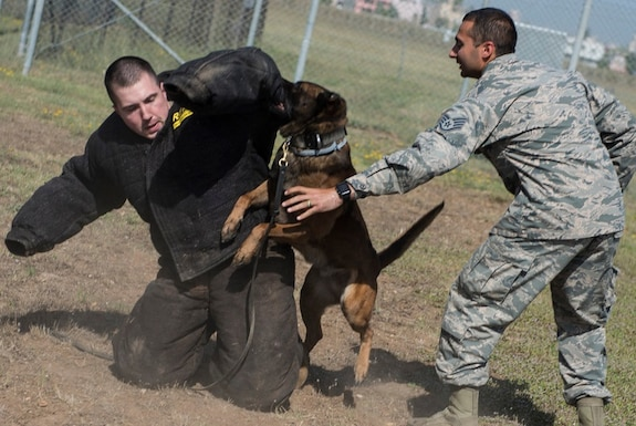 INCIRLIK AIR BASE, Turkey – U.S. Army Capt. James Gaffney, 39th Air Base Wing veterinarian, participates in a controlled aggression tactic demonstration with U.S. Air Force military working dog Buck at Incirlik Air Base, Turkey, June 8, 2018.