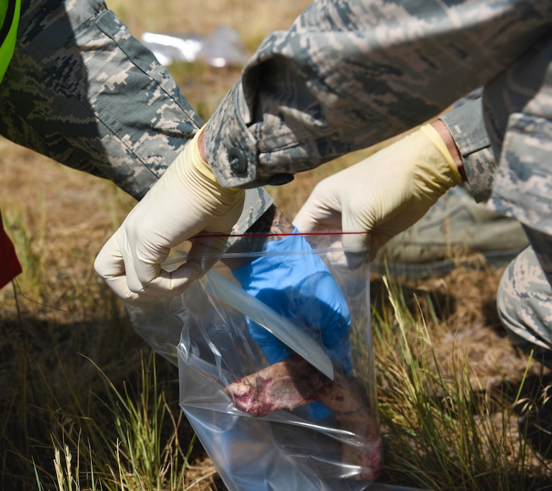 Airmen from the 460th Force Support Squadron and 103rd Special Operations FSS tag and bag meat during a simulated training June 20, 2018, on Buckley Air Force Base, Colorado. During the simulation real meat was used to simulate the smell of flesh. (U.S. Air Force photo by Airman 1st Class Michael D. Mathews)