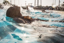 Rct. Antuan Fletcher Platoon 3061, India Company, 3rd Recruit Training Battalion, swims 25 meters during swim qualification June 21, 2018, at Marine Corps Recruit Depot Parris Island, S.C. Fletcher, 18, from Detroit, is scheduled to graduate Aug. 17, 2018.