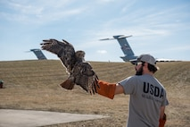 West Virginia's only master bird bander, Chad Neil, a USDA wildlife airport biologist, holds a red-tail hawk that was caught at the 167th Airlift Wing, Feb. 20, 2018. The hawk was banded and translocated to a wildlife management area in Hardy County, W.Va., Feb. 21.