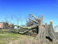 """This is what remains of the 150-year-old Wisdom Tree located on the campus of Marine Corps University.  The iconic tree, which was old, frail and had root fungus, could not withstand the winds of the """"bomb cyclone"""" which hit the area on March 2."""
