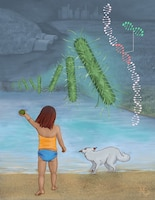 A child throws a rock into a body of water with her dog poised to jump in after it. Looming large in the foreground are genetically engineered microbes and a strand of DNA.