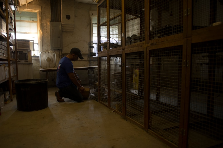 Tech. Sgt. Arturo Garcia, 47th Student Squadron command support staff NCO in charge, cleans a cat litter box at an animal shelter in Del Rio, Texas, March 3, 2018. With nearly 500 volunteers that day, the 47th Student Squadron dedicated approximately 15,000 man hours to serving the local community. (U.S. Air Force photo/ Airman 1st Class Benjamin N. Valmoja)