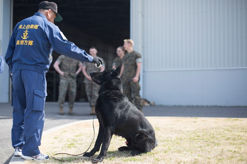MCAS Iwakuni PMO hosts joint K-9 training