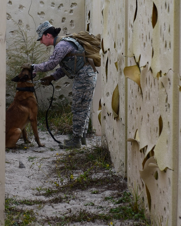 U.S. Air Force Staff Sgt. Caitlin Bourque, 325th Security Forces Squadron military working dog handler, checks her partner during an exercise at Tyndall Air Force Base, Fla., Nov. 27, 2017. A military working dog handler is responsible for the care and training of his or her service dog, which contributes to combat operations abroad and installation security at home by providing target odor detection for both explosives and drugs. (U.S. Air Force photo by Senior Airman Cody R. Miller/Released)