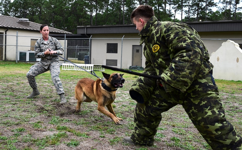 U.S. Air Force Staff Sgt. Caitlin Bourque, 325th Security Forces Squadron military working dog handler, takes part in a demonstration at Tyndall Air Force Base, Feb. 9, 2018. A military working dog handler is responsible for the care and training of his or her service dog, which contributes to combat operations abroad and installation security at home by providing target odor detection for both explosives and drugs. (U.S. Air Force photo by Senior Airman Cody R. Miller/Released)