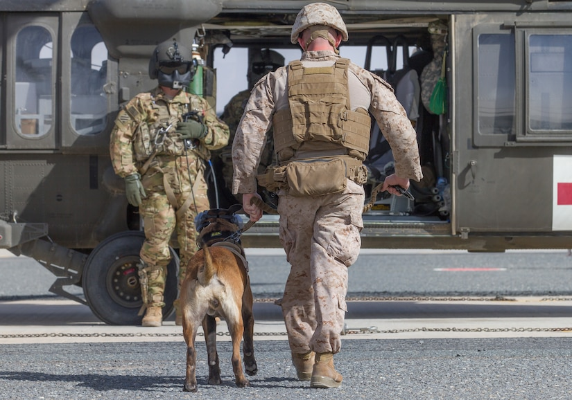 Sergeant Alexander Lucas, a military dog handler with the 1st Marine Expeditionary Force, and his military working dog, Patriot, prepare to board a UH-60 Black Hawk helicopter as part of medical evacuation training at Camp Buehring, Kuwait, March 13, 2018.