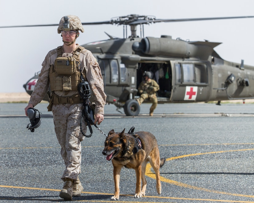 Sergeant Suzette Clemons, a military dog handler with the 1st Marine Expeditionary Force, and her military working dog, Denny, walk back to the loading zone following their ride in a UH-60 Black Hawk helicopter as  part of medical evacuation training at Camp Buehring, Kuwait, March 13, 2018.
