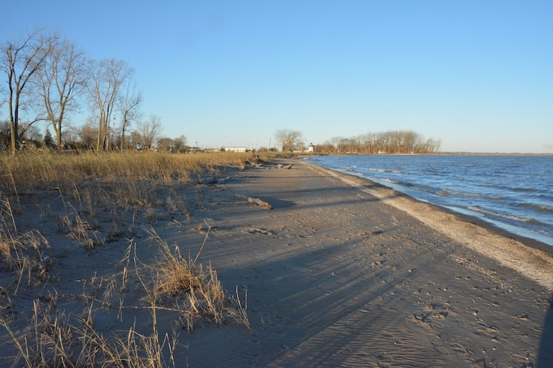 Phragmites overruning a beach area in Port Clinton. The invasive species is negatively impacting the habitat of plant and animal species along the coast. (Picture by Chris Akios)