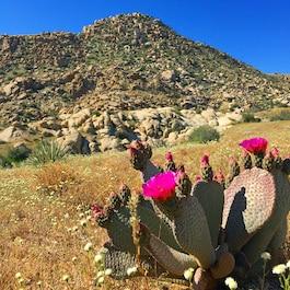 Springtime brings an abundance of bright blooms throughout the desert.