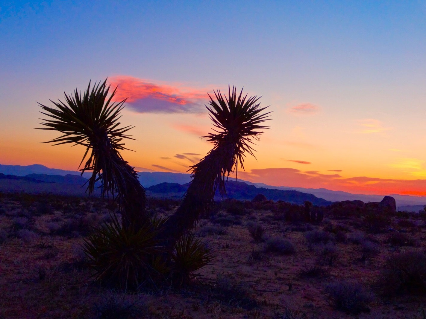 Desert skies are filled with shades of pink and orange during sunset.