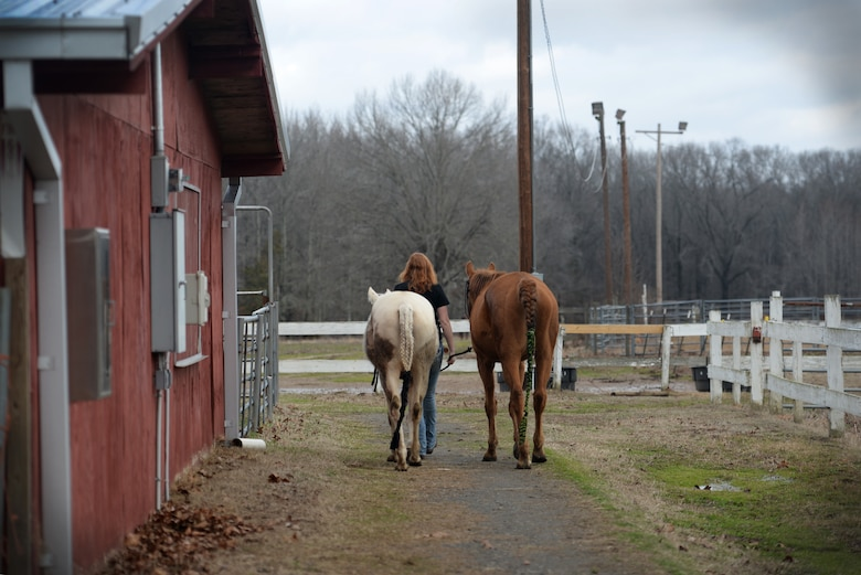 A girl walks away from the camera holding onto two leads attached to a white and a brown horse.