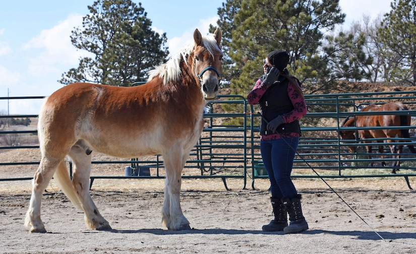Pikes Peak Therapeutic Riding Center staff member Amy May and therapeutic horse Bear work on training in a round pen on PPTRC grounds in Colorado Springs on Monday, Mar. 5th, 2018.