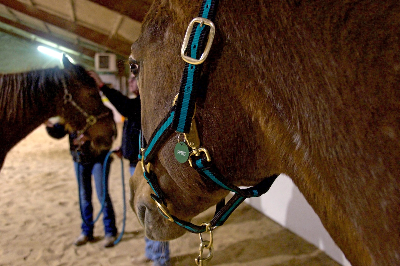 Therapeutic horse Fancy stands by awaiting instruction from a staff member during training at the Pikes Peak Therapeutic Riding Center in Colorado Springs on Thursday, Mar. 9th, 2018.
