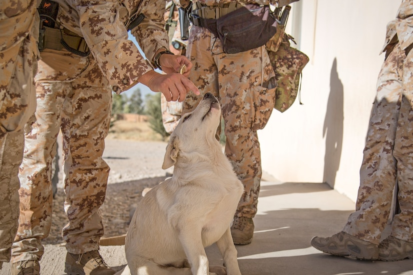 Erby the dog gets some love from coalition soldiers in the Kurdistan Training Coordination Center near Irbil, Iraq.