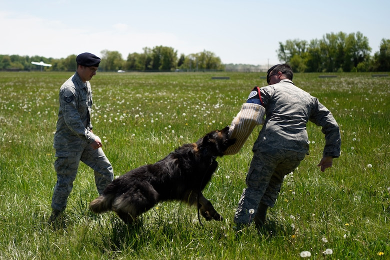 Staff Sgts. David Bischoff and Marc Gaskin, 436th Security Forces Military Working Dog handlers, demonstrate the ability of Terry, one of the squadron's MWDs, during an honorary commanders' tour May 9, 2018, at Dover Air Force Base, Del. The military working dogs are used for sniffing out explosives and narcotics. (U.S. Air Force photo by Airman 1st Class Zoe Wockenfuss)