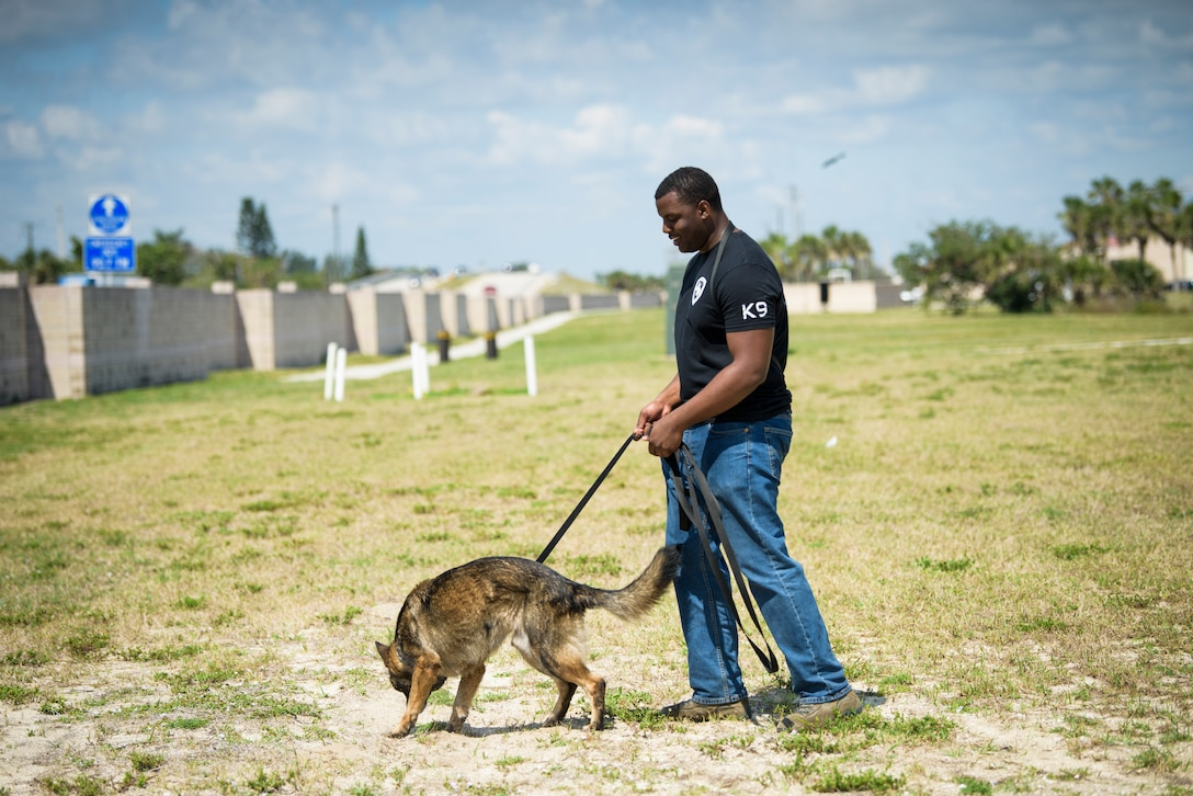 Senior Airman Antoine Carr, future military working dog handler, watches as MWD Dome does a sweep for explosive materials April 26, 2018 at Patrick Air Force Base, Fla. Carr, until his own MWD returns froma deployment, trains with other handler's dogs – but says he can't wait for the day that he can go on patrols, do sweeps and just enjoy the company of his own dog. (U.S. Air Force phot by Airman 1st Class Zoe Thacker)
