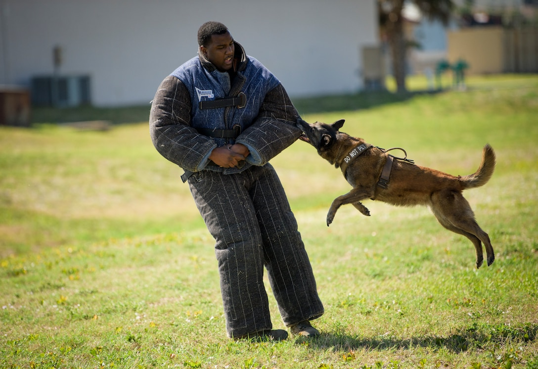 Senior Airman Antoine Carr and military working dog Beta put on a demonstration for a JROTC class from a local high school April 27th, 2018 at the kennel on Patrick Air Force Base, Fla. Until Carr becomes an official K-9 handler and his dog returns from deployment, he's tasked with demonstrations, cleaning the kennels, feeding the MWD's and taking them out for exercise. (U.S. Air Force photo by Airman 1st Class Zoe Thacker)