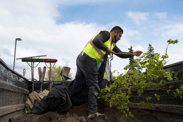 Alberto Cortez, a construction and landscape specialist with Faltz Landscaping and Nursery, unwraps a spruce tree during an Arbor Day event at Ursa Major Elementary School at Joint Base Elmendorf-Richardson, Alaska, May 21, 2018. Ecologists and participants planted two trees at Ursa Major Elementary and the JBER Cache in celebration of Alaska's Arbor Day, May 17 and 21. National Arbor Day is always celebrated on the last Friday in April, however, Alaska's Arbor Day is celebrated on the third Monday in May. The Arbor Day Foundation recently named JBER a 2018 Tree City USA, an honor the base has earned for 21 years running.