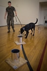 Camp Pendleton Marines organize regional ATF K9 training