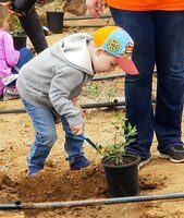 A little boy helps dig a hole to plant native vegetation during a community planting event May 12 near the Santa Ana River in Norco, California.