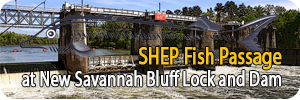 SHEP Fish Passage at New Savannah Bluff Lock and Dam