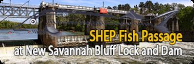 SHEP Fish Passage at New Savannah Bluff Lock and Dam