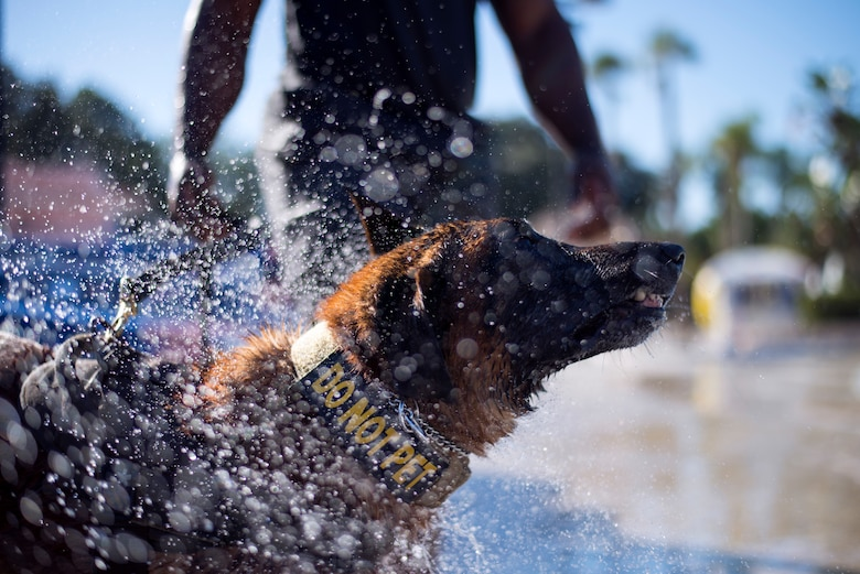 U.S. Air Force 6th Security Forces Squadron military working dog, Lleonard, shakes off water during a water aggression training exercise at Adventure Island, Tampa, Fla. Oct. 29, 2018.