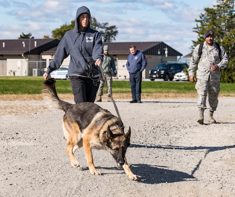"""Sgt. Katie Edgar, Worcester County, Md., Sheriff's Department K-9 Unit supervisor, along with her partner, """"Brina,"""" a three-year-old German Shepherd narcotics detection dog, search for hidden narcotics Oct. 24, 2018, at Dover Air Force Base, Del. Tech. Sgt. Dominique Singleton, right, 436th Security Forces Squadron military working dog kennel master, set up two separate areas containing narcotics or explosives. (U.S. Air Force photo by Roland Balik)"""