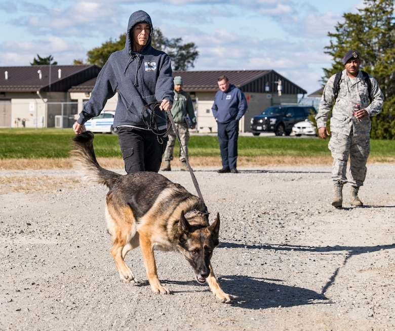 "Sgt. Katie Edgar, Worcester County, Md., Sheriff's Department K-9 Unit supervisor, along with her partner, ""Brina,"" a three-year-old German Shepherd narcotics detection dog, search for hidden narcotics Oct. 24, 2018, at Dover Air Force Base, Del. Tech. Sgt. Dominique Singleton, right, 436th Security Forces Squadron military working dog kennel master, set up two separate areas containing narcotics or explosives. (U.S. Air Force photo by Roland Balik)"
