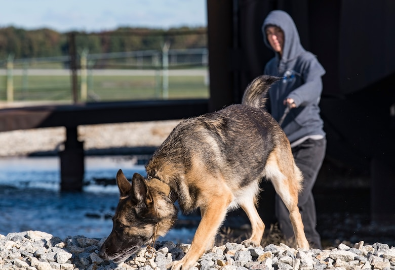 "Sgt. Katie Edgar, Worcester County, Md., Sheriff's Department K-9 Unit supervisor, along with her partner, ""Brina,"" a three-year-old German Shepherd narcotics detection dog, search for hidden narcotics Oct. 24, 2018, at Dover Air Force Base, Del. Several members from the Worcester County Sheriff's Department and two working dogs participated in the joint training session hosted by the 436th Security Forces Squadron from Dover AFB. (U.S. Air Force photo by Roland Balik)"