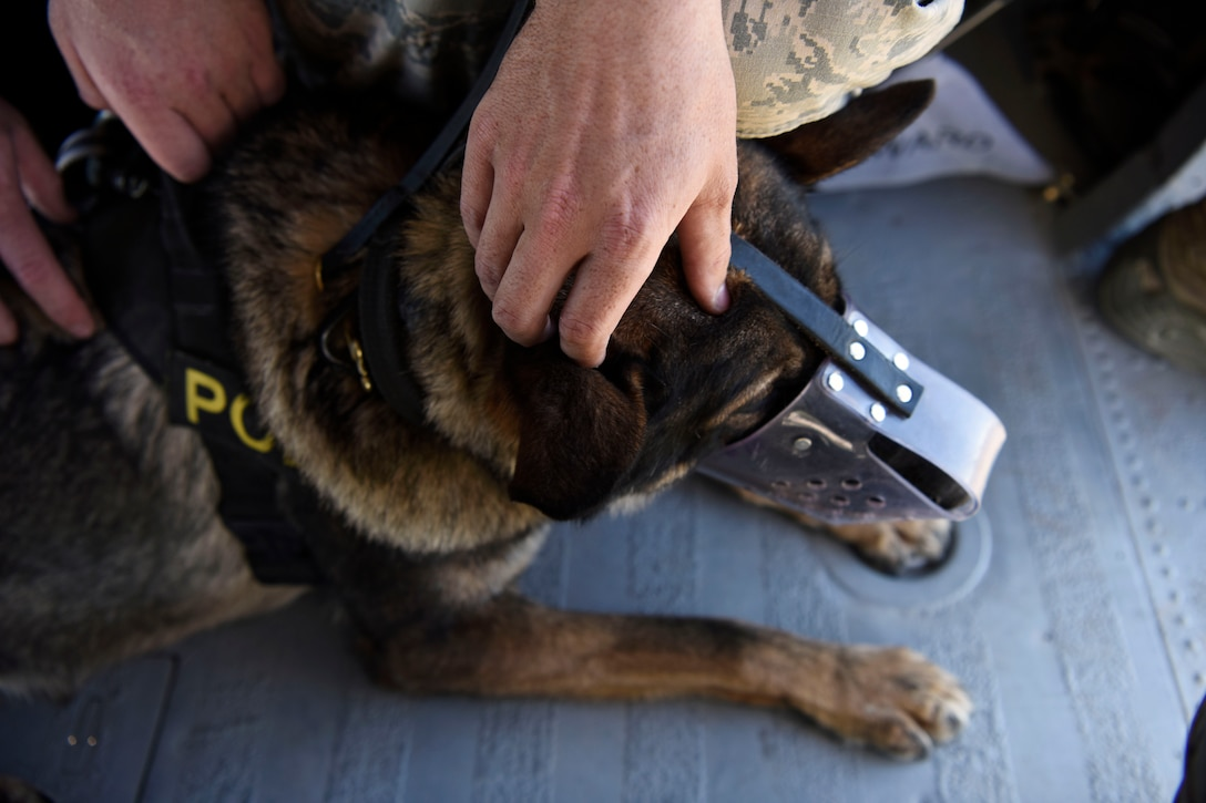 Members from the 56th Security Forces Squadron and the Arizona Army National Guard hold onto a military working dog while flying in a UH-60 Black Hawk during a joint training exercise at Glendale Municipal Airport Nov.