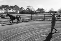 U.S. Air Force Staff Sgt. Cody Wisley, 83rd Network Operations Squadron boundary protection supervisor, has his horse Steel run in a round pen at Joint Base Langley-Eustis, Virginia, April 12, 2018.