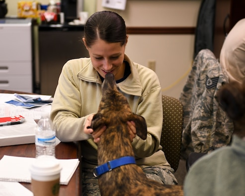 Boris, therapy dog with the 911th Airlft Wing, greets Tech. Sgt. Allissa Landgraff, broadcaster with the 911th AW, at the Pittsburgh International Airport Air Reserve Station, Pa., October 13, 2018. Boris' primary role at the 911th AW is to improve morale and lift the spirits of anyone in need, which is accomplished through animal-assisted activities.