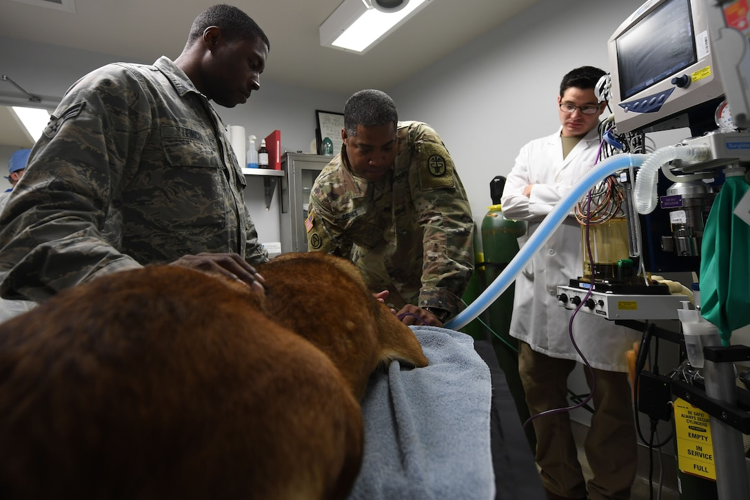 A group of people monitor the vitals of a dog on an operating table.