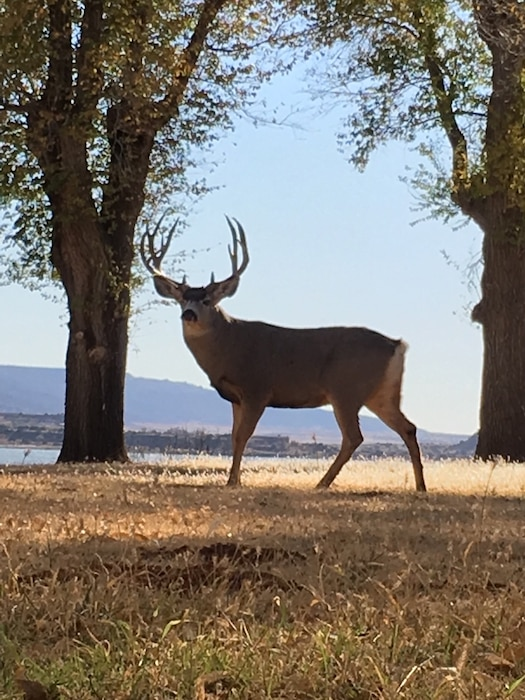 CONCHAS LAKE, N.M. -- A buck stands near one of the Adobe Belle housing units at the lake. Photo by Ronald Carter. This 2018 photo drive entry was one in a four-way tie for second place, based on employee voting.