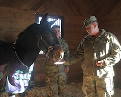 "Maj.Gen. Flem ""Donnie"" Walker, Jr. Commanding General of the 1st Theater Sustainment Command feeds Cpl. John ""Huck"" Blackjack an alfalfa cookie in his stall at the Providence farm. Cpl. Blackjack serves as the 1st TSC official mascot, making appearances at many command events."