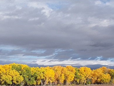 COCHITI DAM, N.M. – Cottonwood trees show off their autumn leaves along the Santa Fe River below the spillway, Oct. 24, 2018. Photo by Marcos Rosacker. This was a 2018 photo drive entry.