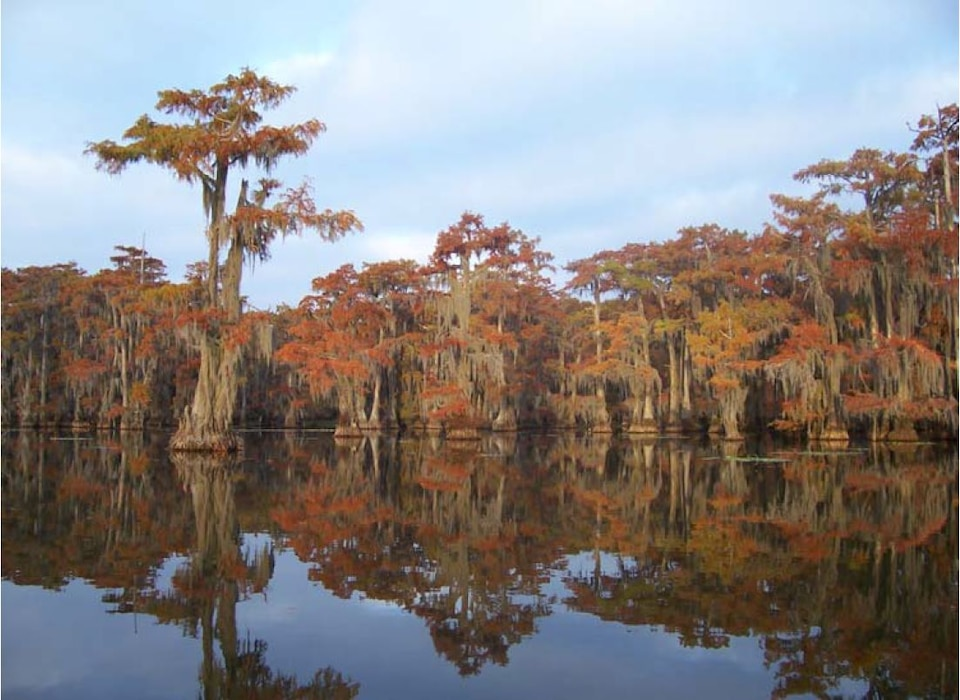 In eastern Texas the Big Cypress Bayou flows into Caddo Lake, which was named a globally significant wetland by the Ramsar Convention. Sustainable Rivers Program activities are seeking to re-introduce variability in river flows to regenerate rare cypress forests and fish habitats.