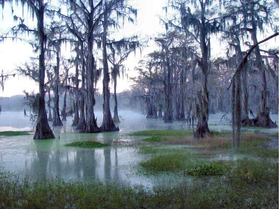 The Caddo/Cypress Sustainable Rivers project is focused around Caddo Lake, located in North East Texas on the Texas Louisiana border, its contributing tributaries, and associated wetlands. The watershed is approximately 2,970 square miles, about a third of which is regulated by Lake o' the Pines and other upstream reservoirs