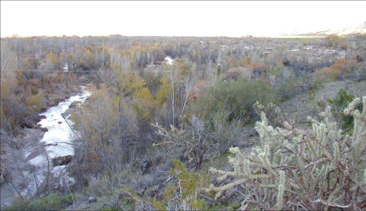 The Bill Williams River and floodplain are shown during a time of high release from Alamo Dam. High flows in the Bill Williams are critical for renewing riparian forest and maintaining channel habitat.
