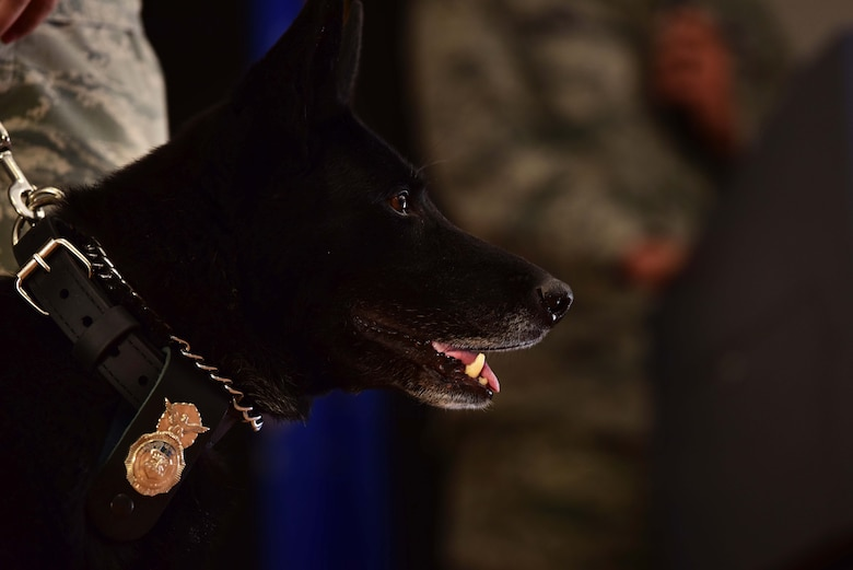 Kiara, 799th Security Forces Squadron Military Working Dog, stands before Maj. Kenneth, 799th SFS commander, recounts key moments throughout her years of service during her retirement ceremony at Creech Air Force Base, Nevada, Nov. 15, 2018. MWD teams play a vital role in the defense of local and global operations. (U.S. Air Force photo by Airman 1st Class Haley Stevens)