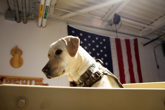 Unit Ministry Dog Boosts Morale
