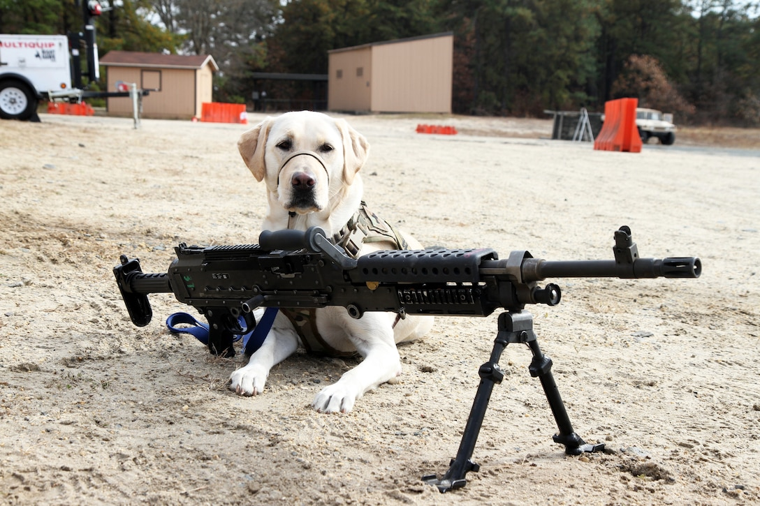 Unit Ministry Dog Boosts Morale