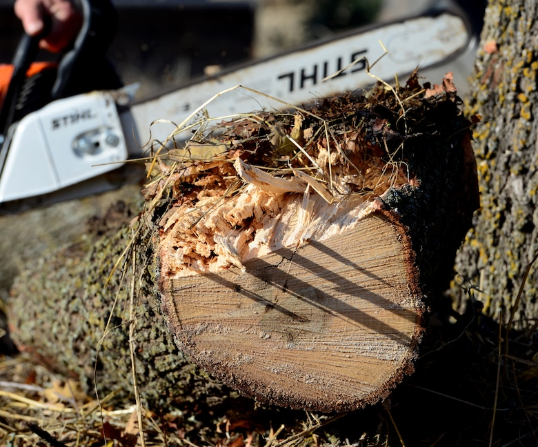 Lumber jacks of all trades: 9th CES Dirt Boyz cut trees, clear brush