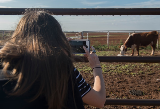 A woman takes a picture of a cow
