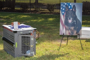 Military working dog remembered after nearly a decade of service