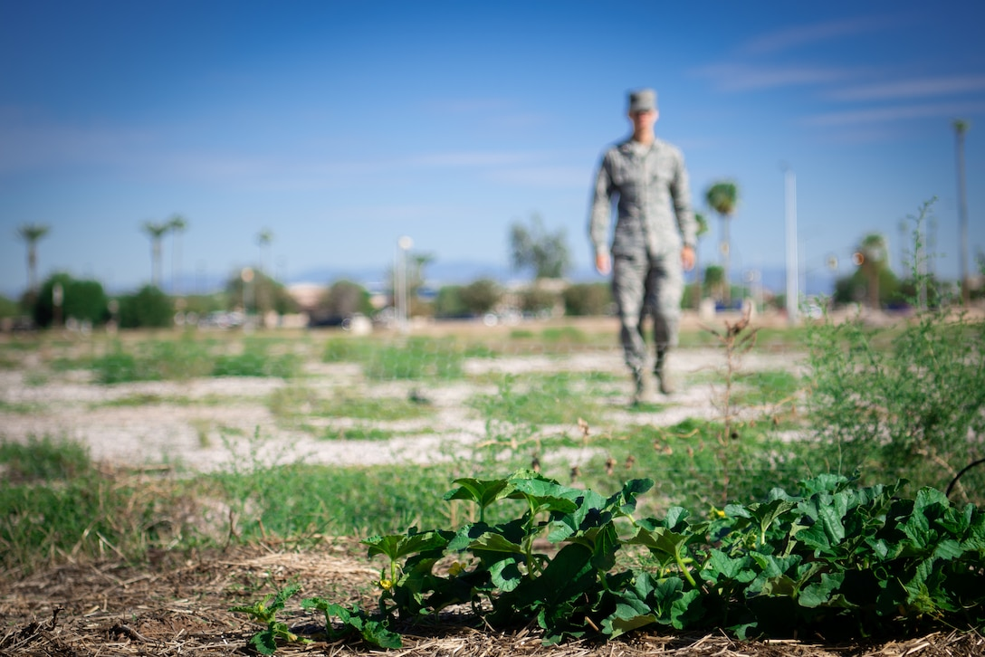 An Airmen assigned to the 56th Fighter Wing walks to the base community garden plot to tend to crops, Oct. 9, 2018 at Luke Air Force Base, Ariz.