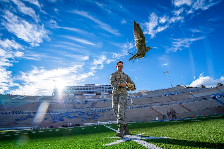 An Air Force cadet lures a flying falcon in the middle of an empty football stadium.