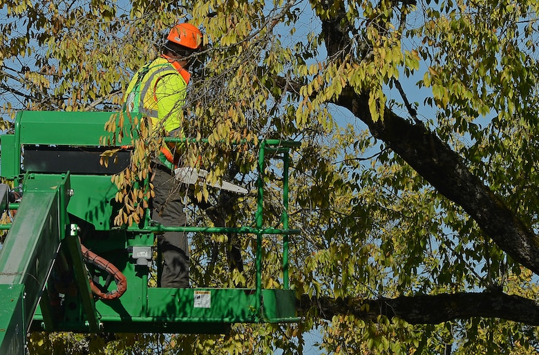 A member of Directorate of Public Works prune trees during a Historical Reset project Oct. 12, 2018 on McChord Field, Joint Base Lewis McChord, Wash.